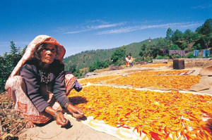 Drying-Crops